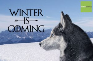 winter is coming hond